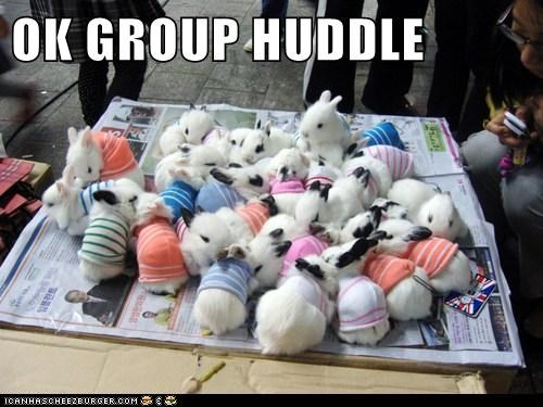 bunnies,group huddle,newspaper,rabbits,sweaters