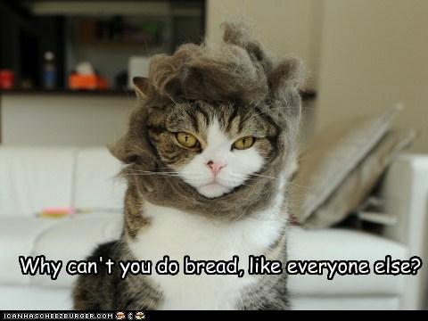 bread different fur head independent weird wtf - 6218441472