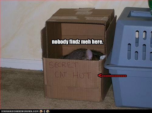 box boxes cardboard box Cats FAIL hide hiding hut lolcats obvious secret - 6218569472