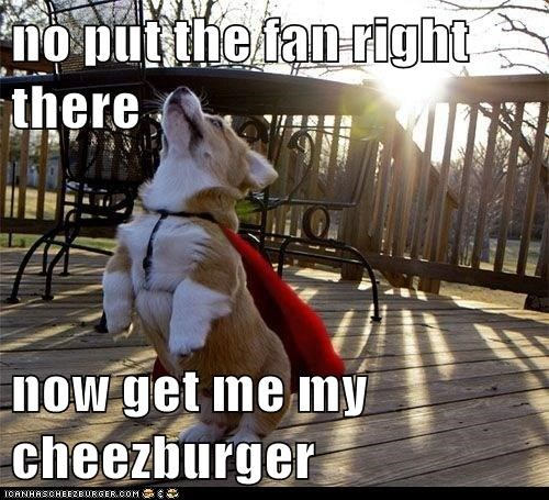 Cheezburger Image 6218654464