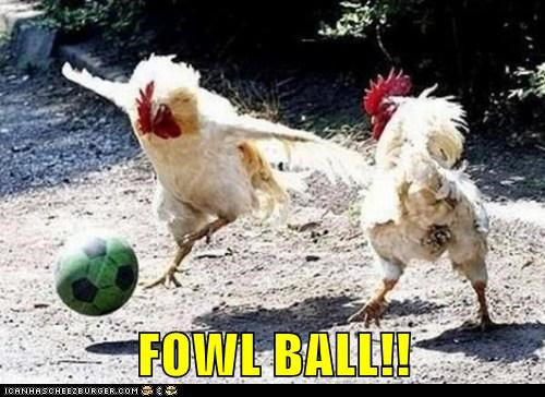 baseball chicken foul ball fowl puns soccer sports - 6219219456