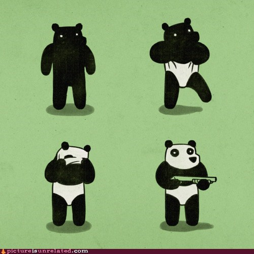 bear best of week panda robber wtf