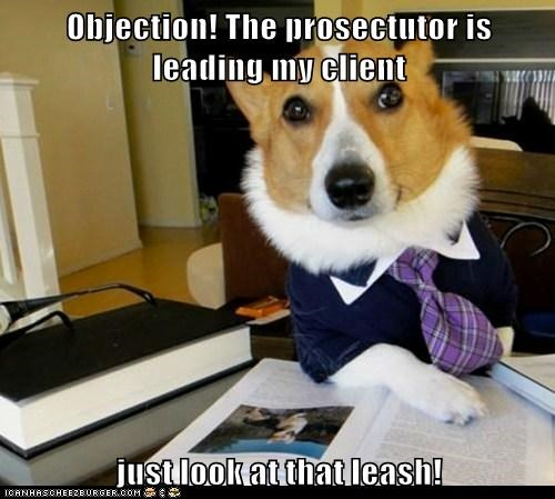 Lawyer Dog - 6219564800
