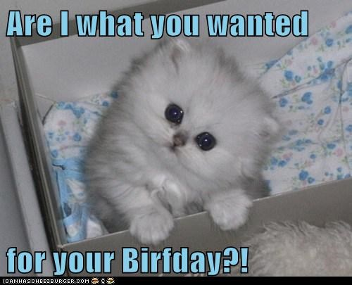 birthday Cats creepy cute eyes gift kitten lolcats present presents stare - 6219805696