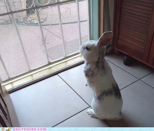 bunny door pet rabbit reader squees stand - 6220211456