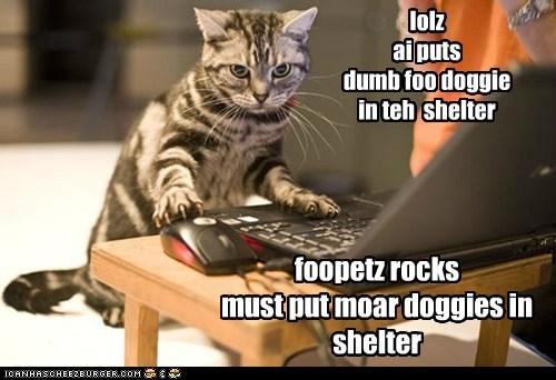 lolz ai puts dumb foo doggie in teh shelter foopetz rocks must put moar doggies in shelter