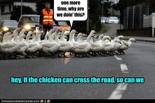 crossing the road,ducks,group,holding up,joke,old joke,traffic
