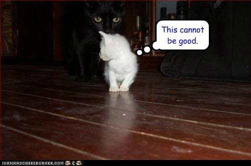 basement cat big dark scary soul steal - 6220806656