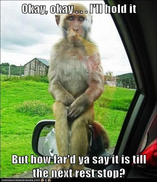 car far have to pee hold it in monkey rest stop side mirror sitting waiting - 6220933888
