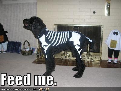 halloween skeleton - 622115584