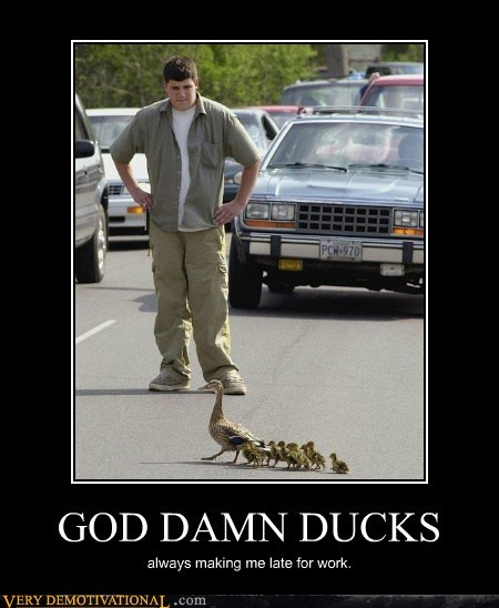 crossing,ducks,hilarious,irritating,late