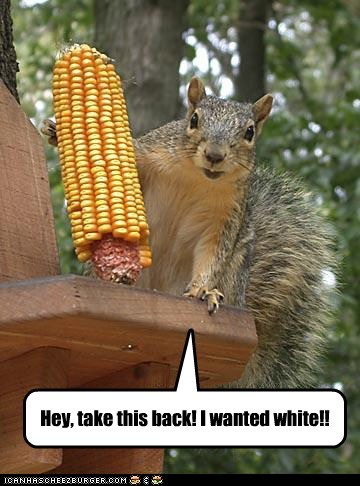 corn,eating,picky eater,service,squirrel,waiter,white corn,yellow corn
