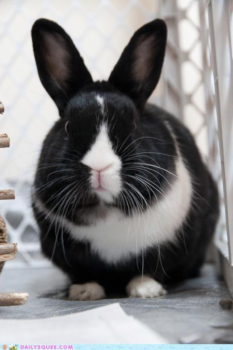 bunny grumpy pets rabbit reader squees - 6221854464