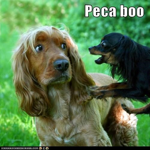 Cheezburger Image 6222172160