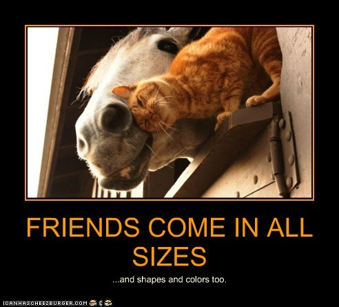 barn cat cuddle friends horse window - 6223426048