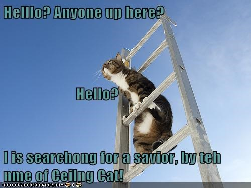 Helllo? Anyone up here? Hello? I is searchong for a savior, by teh nme of Ceilng Cat!