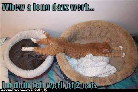 Whew a long dayz werk... Im doin teh werk of 2 catz