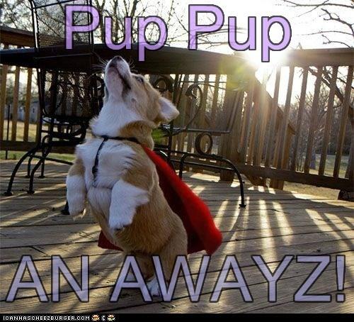 Well, iz Ai flyin'? Pup Pup AN AWAYZ!