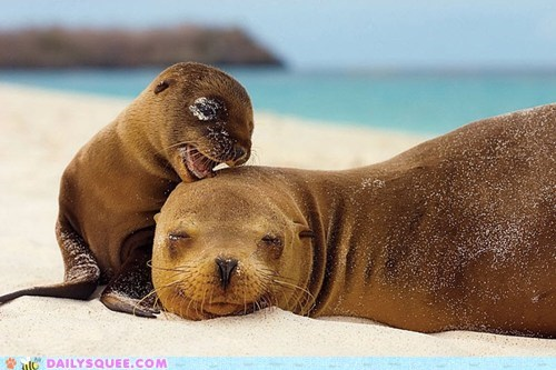 baby beach mommy moms ocean sand seals sleeping in squee - 6223978496
