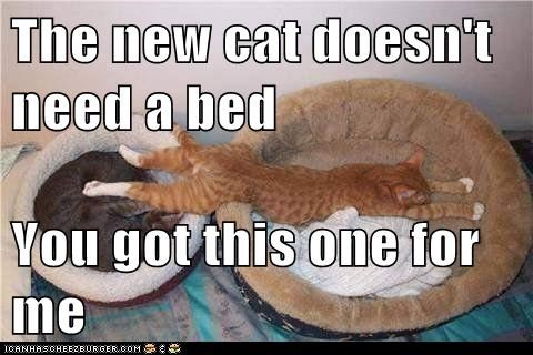 The new cat doesn't need a bed You got this one for me
