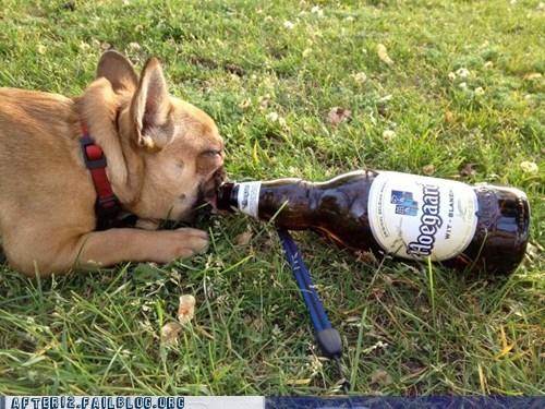 beer crunk critters dogs hoegaarden pug - 6224500224