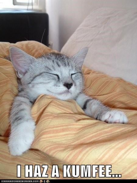 bed cat Cats comfortable comfy i has a lolcats relax sleep sleeping - 6224513024