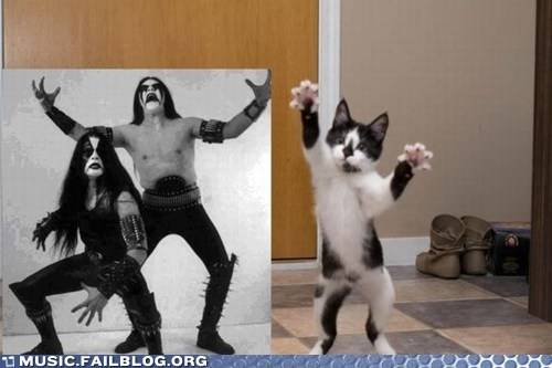 cat,death metal,g rated,immortal,immortal cat,metal,Music FAILS