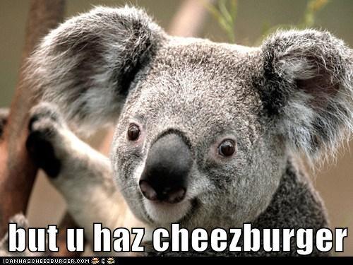 Cheezburger Image 6224815104