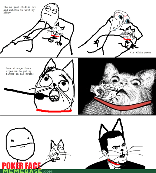 Cats pets poker face Rage Comics wtf - 6224880384