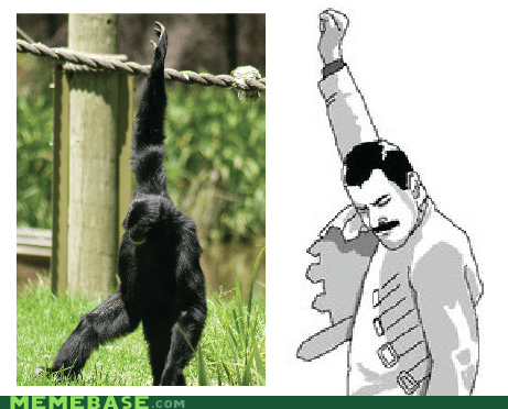 freddie mercury,Memes,monkey,some faith