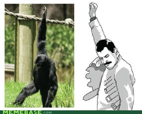 freddie mercury Memes monkey some faith - 6225904640