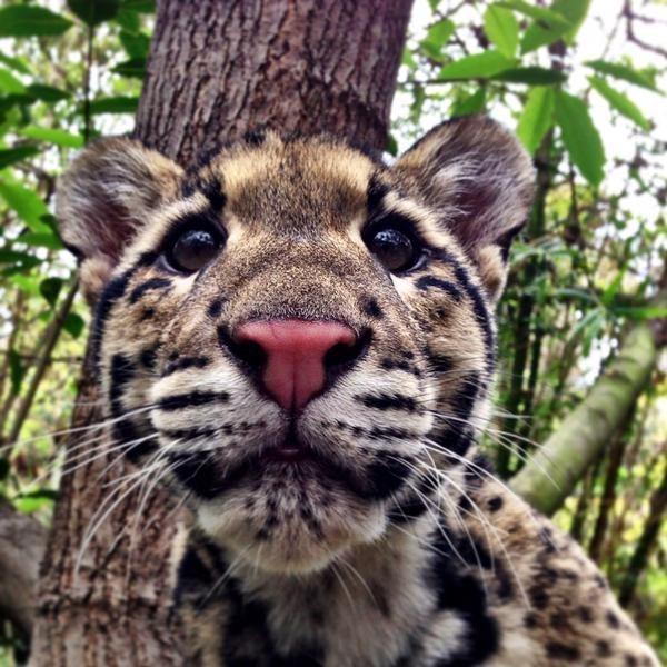 twitter list cute animals - 622597