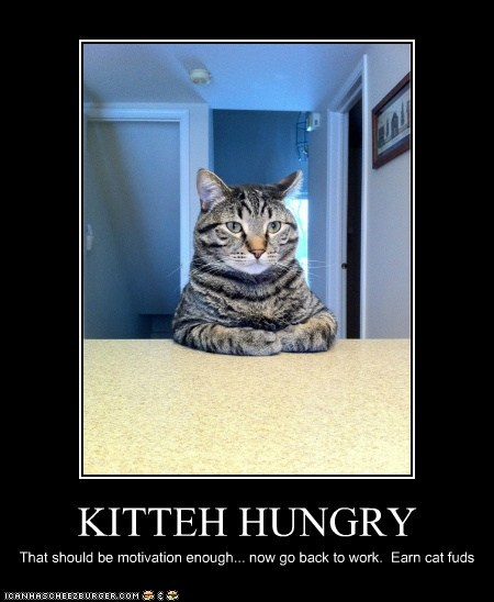 KITTEH HUNGRY That should be motivation enough... now go back to work. Earn cat fuds