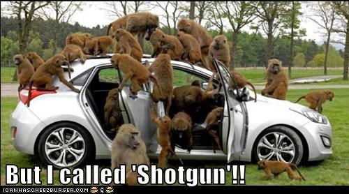 Bunch of monkeys checking out a car.