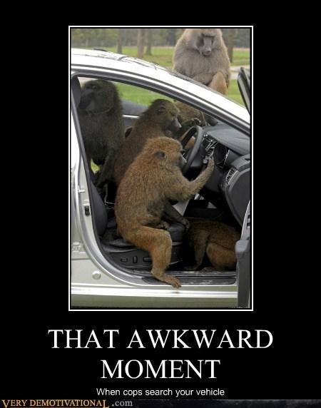 car cops hilarious monkeys search - 6226656512