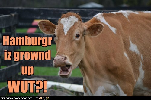 Cheezburger Image 6226776832
