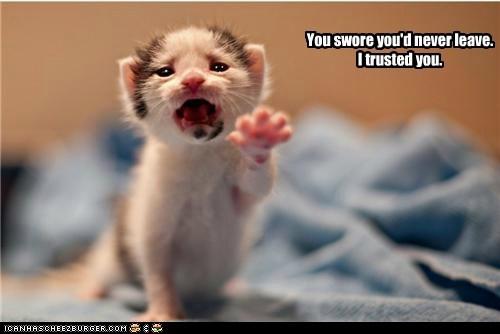 baby kitten leave no Reach trust wait - 6226966272