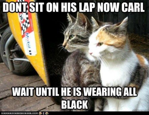 annoying,black,Cats,clothing,fur,Memes,restraining cat