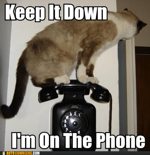 keep it down,literal cat,on the phone