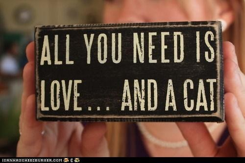 All you need is love best of the week Cats Hall of Fame love signs - 6227516160