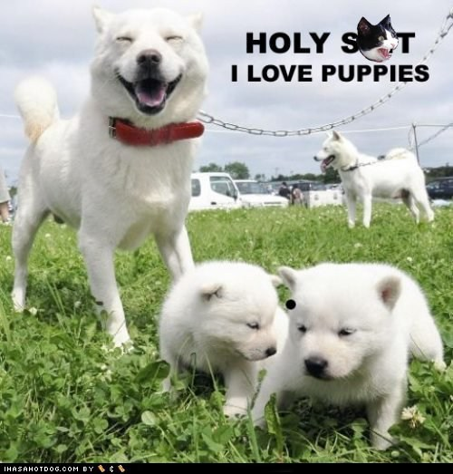 american eskimo dog dogs i love dogs puppies - 6227518208