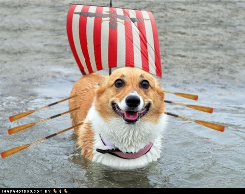 best of the week corgi corgis dogs Hall of Fame photoshopped ship viking vikings water - 6227538688