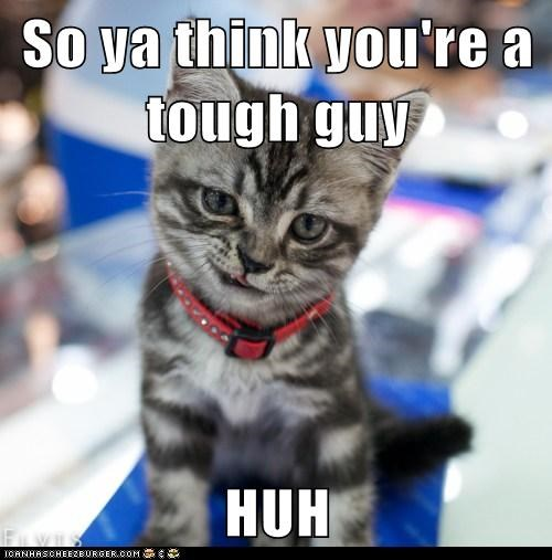 best of the week Cats fight gangster Hall of Fame Movie reference snarl sneer tough tough guy