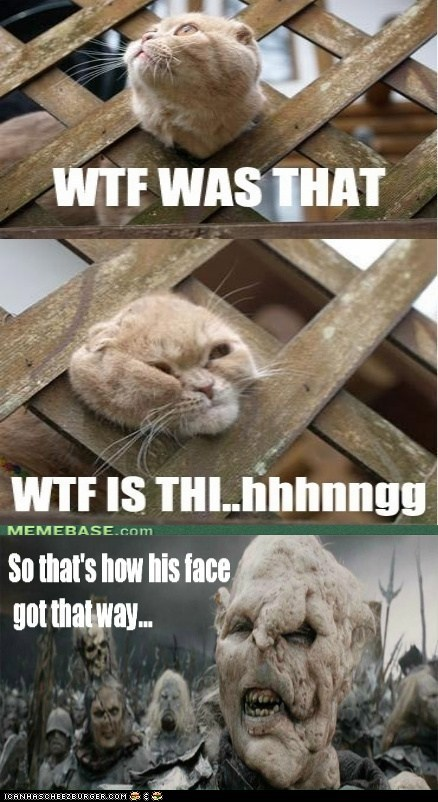 Cats,fence,gothmog,Lord of the Rings,movies,multipanel,stuck,wtf