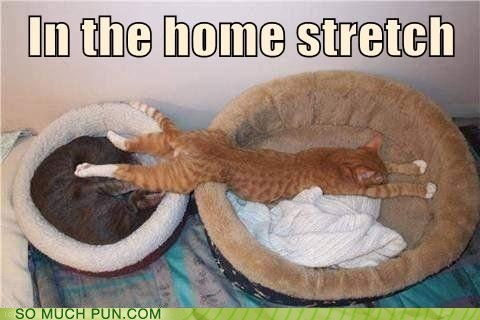 cat,Hall of Fame,home,home stretch,idiom,racing,sleeping,stretch,stretching