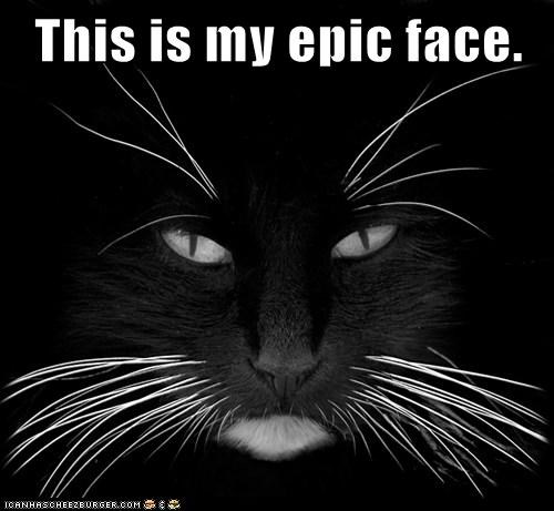 basement cat black and white Cats dramatic epic epic face face Hall of Fame lolcats stare - 6227893760