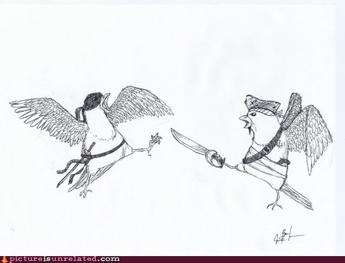 bird,drawing,nature,ninja,pigeons,Pirate,rival,wtf