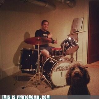 Animal Bomb disapproval dogs drums Sundog