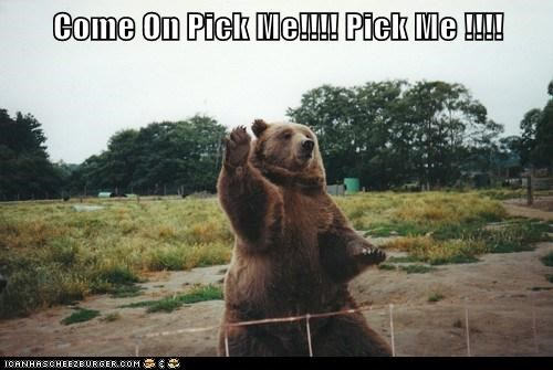 bear,class,i know,pick me,raise hand,school,zoo