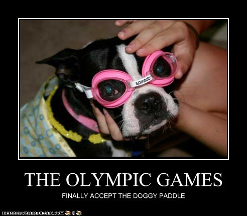 boston terrier,dogs,doggy paddle,goggles,olympics
